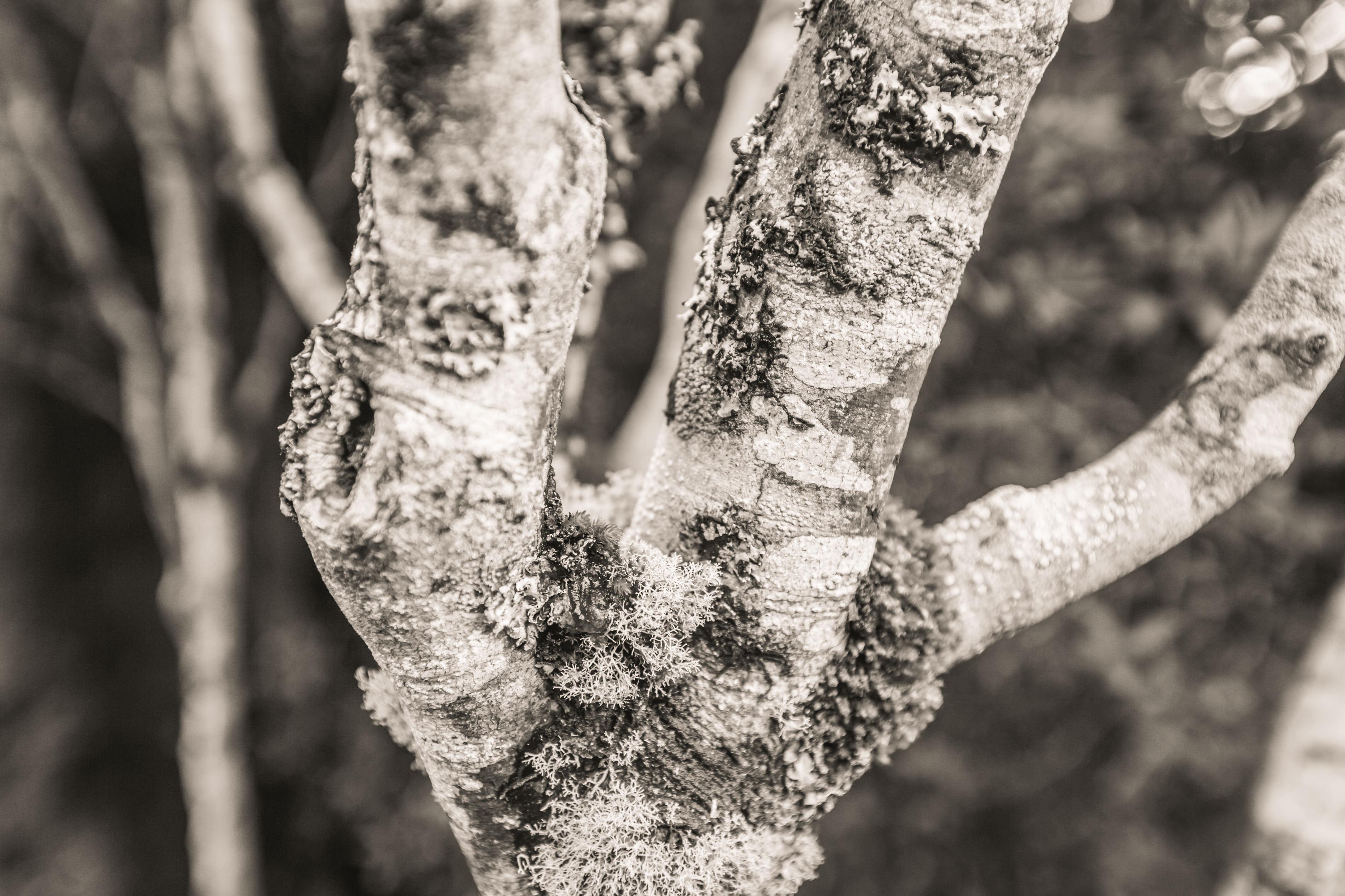 Travel photography of Lichen in Hobart Tasmania